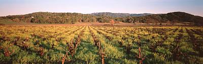 Rows Of Vine In A Vineyard, Hopland Art Print