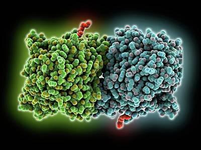 Rpe65 Retinal Pigment Protein Art Print