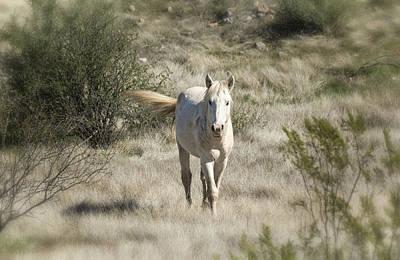 White Stallion Photograph - Running Wild  by Saija  Lehtonen