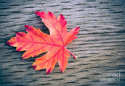 Photograph - Rustic Autumn by Cheryl Baxter