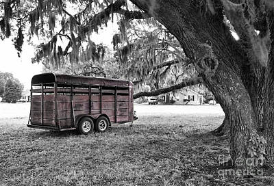 Photograph - Rusty Horse Trailer Under The Live Oak by Scott Hansen