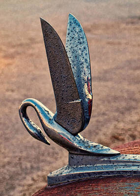 Photograph - Rusty Pelican by Tom Druin