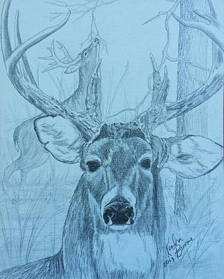 Whitetail Deer Drawing - Rut Time by Kendra DeBerry