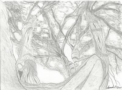 Drawing - Sacred Tree - Looking Up At A Giant by Amanda Holmes Tzafrir
