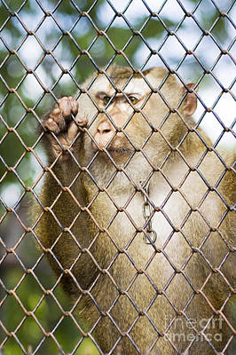 Captivating Photograph - Sadness In Captivity by Jorgo Photography - Wall Art Gallery