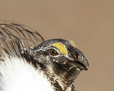 Photograph - Sage Old Bird by Gerry Sibell