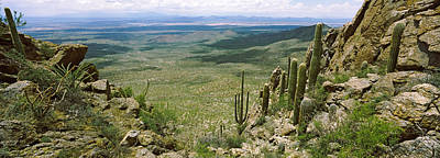 Tucson Photograph - Saguaro Cactus On A Hillside, Tucson by Panoramic Images