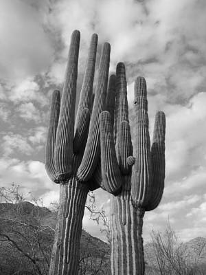 Photograph - Saguaro Love by Keith McGill