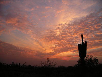 Photograph - Saguaro Sunset by Keith McGill