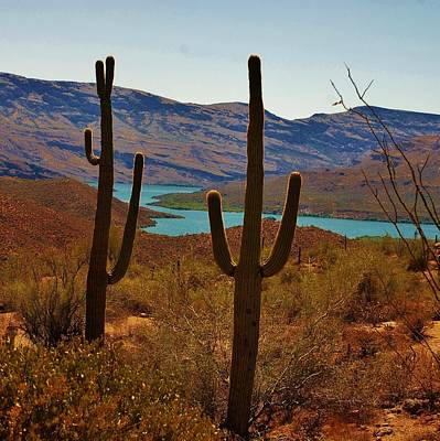 Photograph - Saguaros In Arizona by Dany Lison