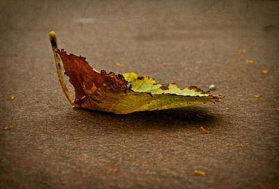 Fallen Leaf Photograph - Sail Away by Odd Jeppesen