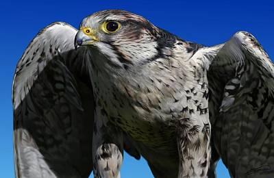 Digital Art - Saker Falcon by Owen Bell