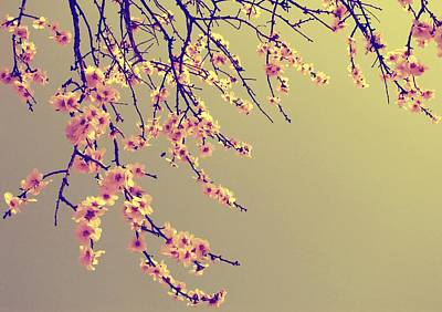 Cherry Blossoms Photograph - Sakura by Marianna Mills