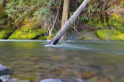 A Fish Out Of Water Photograph - Salt Creek  by Tim Rice
