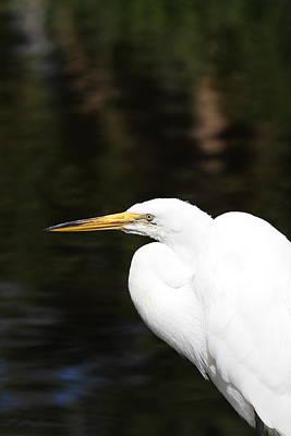 Animal Photograph - San Diego Zoo - 12123 by DC Photographer