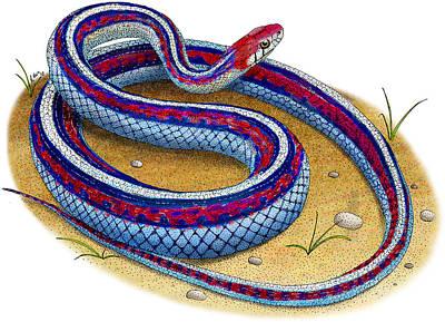Garter Snake Photograph - San Francisco Garter Snake by Roger Hall