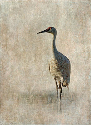 Photograph - Sandhill Crane by Angie Vogel
