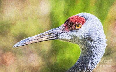 Crane Digital Art - Sandhill Crane Grus Canadensis by Liz Leyden