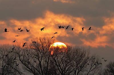 Sutton Photograph - Sandhill Cranes (grus Canadensis by William Sutton