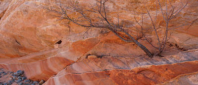 Bare Trees Photograph - Sandstone Patterns, Valley Of Fire by Panoramic Images