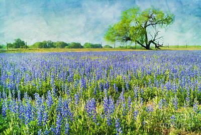 Sandy Bluebonnets Art Print