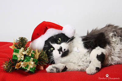 Photograph - Santa Paws  by Kimber  Butler
