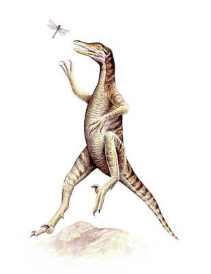 Paleozoology Photograph - Saurornithoides Dinosaur by Deagostini/uig