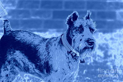 Schnauzer Art Print by Mickey Harkins