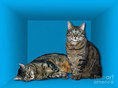 Schrodingers Cat, Artwork Art Print by Victor de Schwanberg