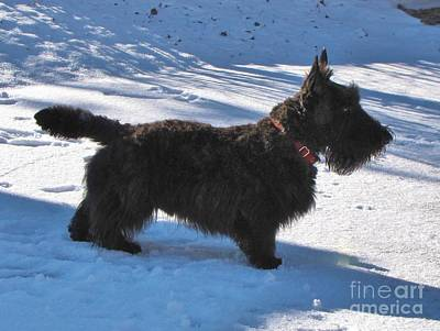 Photograph - Scottie Silhouette by Michele Penner