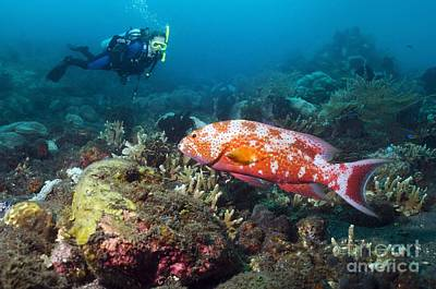 Scuba Diving, Bali Art Print