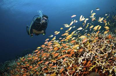 Indonesian Wildlife Photograph - Scuba Diving by Science Photo Library