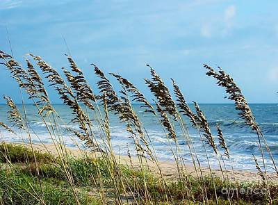 Photograph - Sea Oats By The Sea by D Hackett