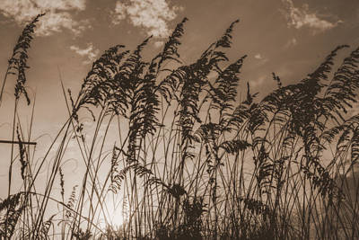 Sea Oats Art Print