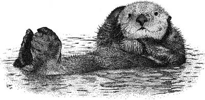 Photograph - Sea Otter by Roger Hall