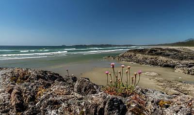 Sea Pink Armeria Maritima Wildflowers Art Print