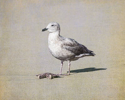 Photograph - Seagull And Starfish by Priya Ghose