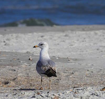 Seagull At Jax Art Print