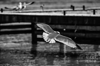 Photograph - Seagull by JT Lewis
