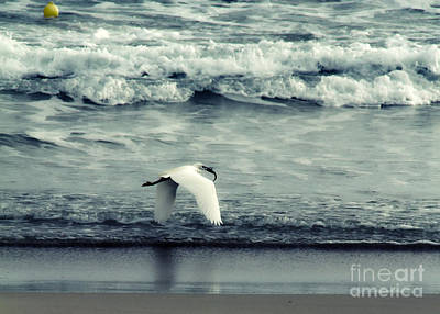 Seagull  Art Print by Stelios Kleanthous