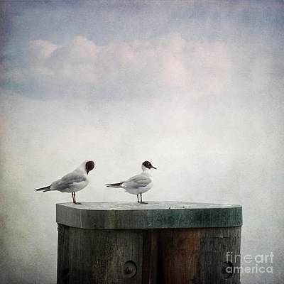 Couples Photograph - Seagulls by Priska Wettstein