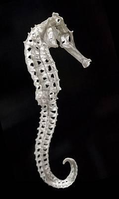 Hippocampus Photograph - Seahorse Skeleton Vertebrate Exoskeleton by Paul D Stewart
