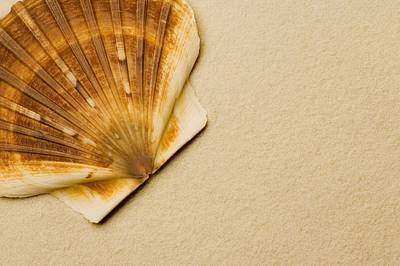 Background And Textures Photograph - Seashell by Darren Greenwood