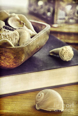 Interior Still Life Photograph - Seashells by HD Connelly