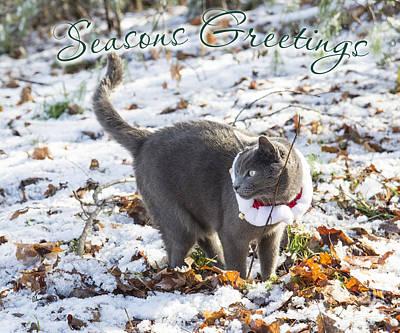 Photograph - Season's Greetings by Alana Ranney