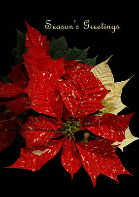 Photograph - Season's Greetings by Angie Vogel