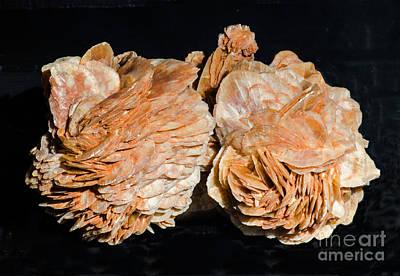Inorganic Solid Photograph - Selenite Crystals by Millard H. Sharp