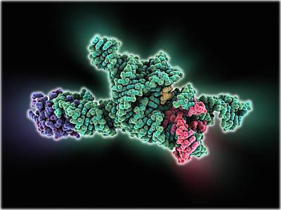 Self-splicing Rna Intron, Molecular Art Print by Science Photo Library