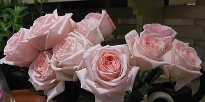 Selfridge Roses Art Print