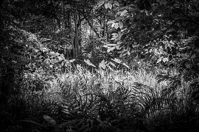 Cypress Knees Photograph - Seminole County Florida Environmental Center Along The Florida Trail Bw    by Rich Franco